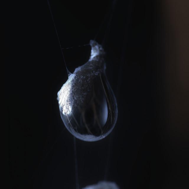 """""""Frozen Dew Drop"""" stock image"""