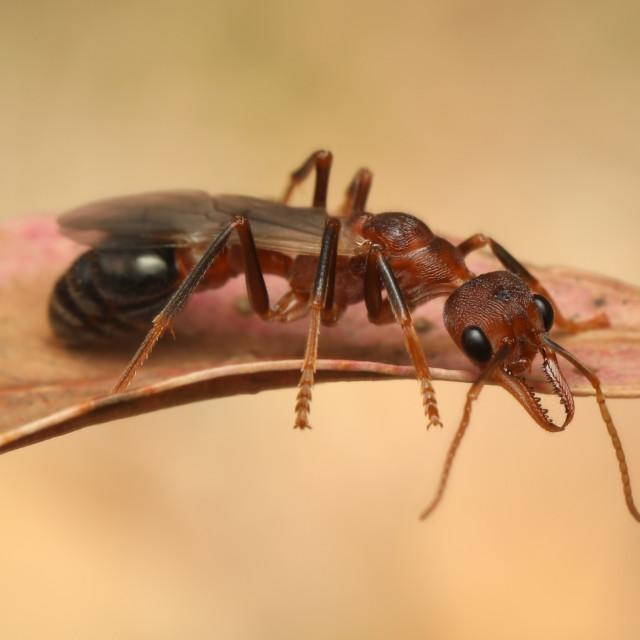 """Ant"" stock image"