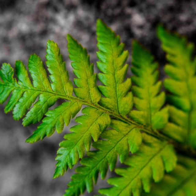 """""""Fern leaf detail"""" stock image"""