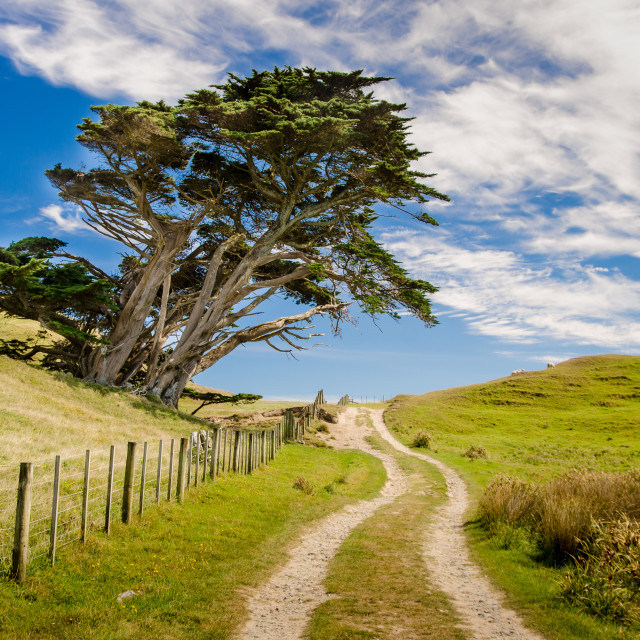 """""""Dirt road and tree, New Zealand"""" stock image"""