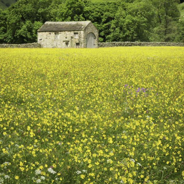 """Swaledale Hay Meadow"" stock image"