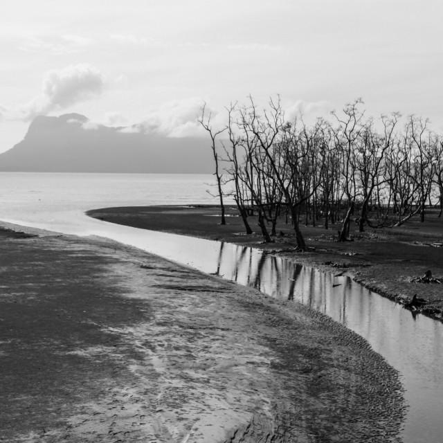"""Bako National Park"" stock image"