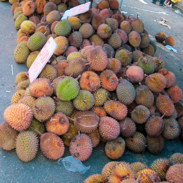 """""""Durians"""" stock image"""