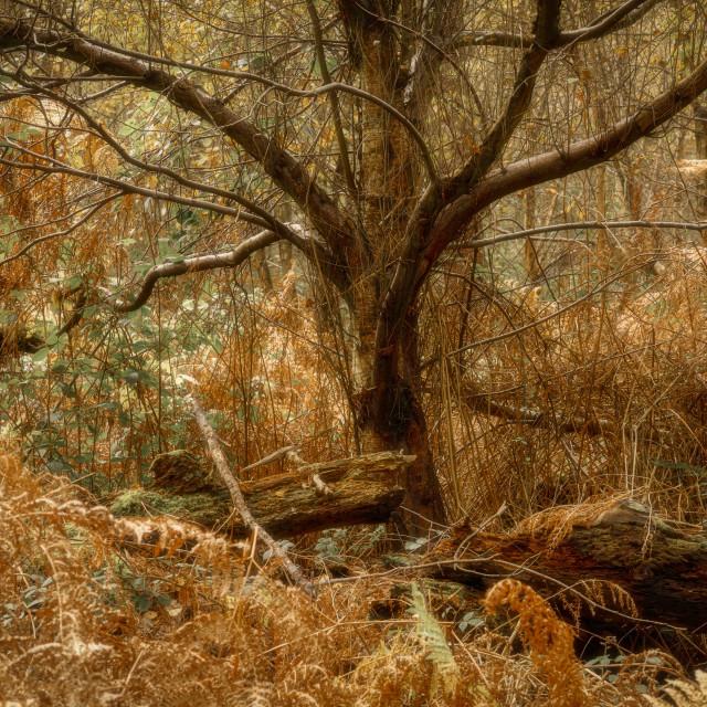 """Autumn Tangle"" stock image"