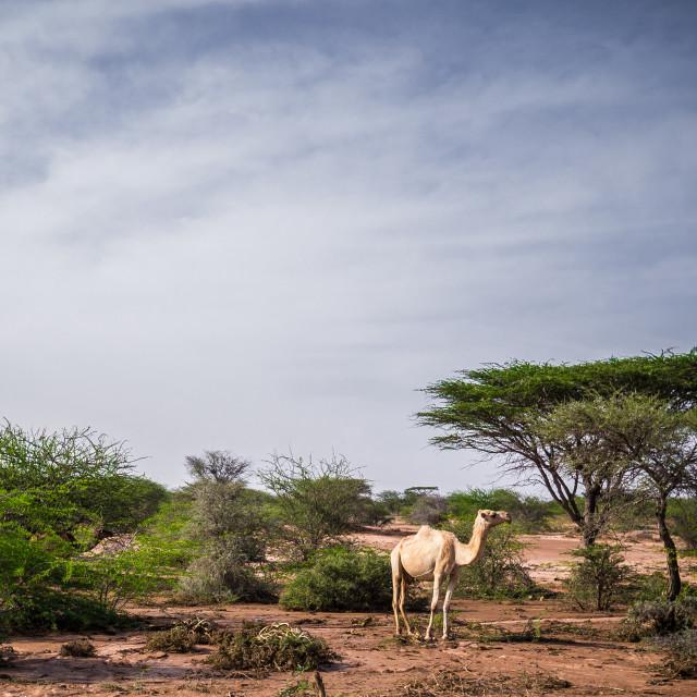 """""""A Somali landscape"""" stock image"""