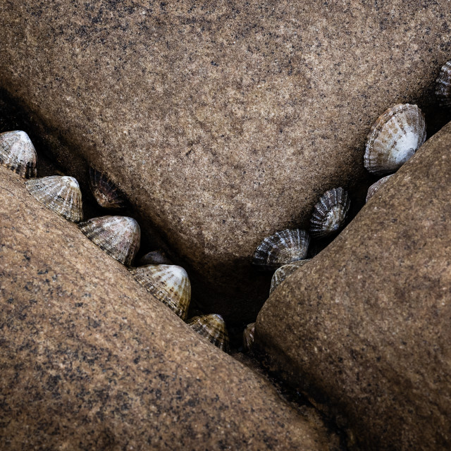 """""""Limpets"""" stock image"""
