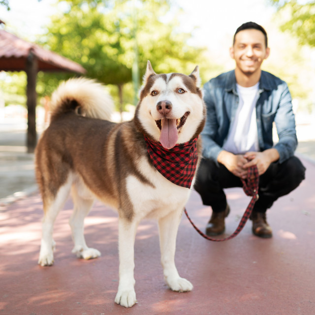 """""""Big brown dog and an adult man smiling in the park"""" stock image"""