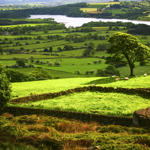 """""""The Dales"""" stock image"""