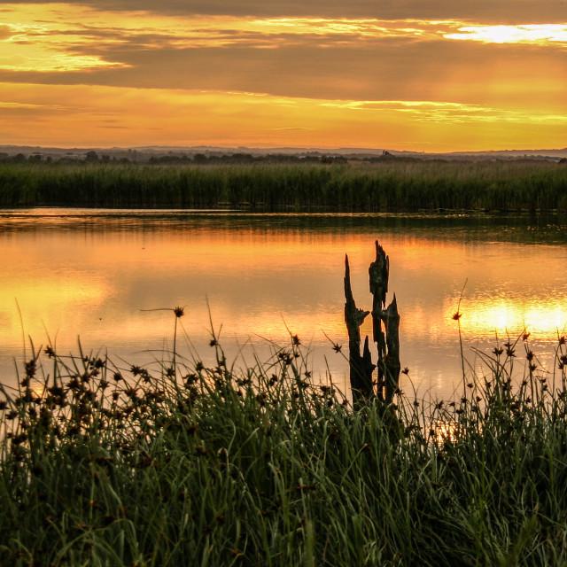 """Marsh Sunrise"" stock image"