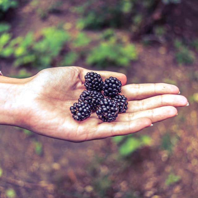 """""""Holding blackberries"""" stock image"""