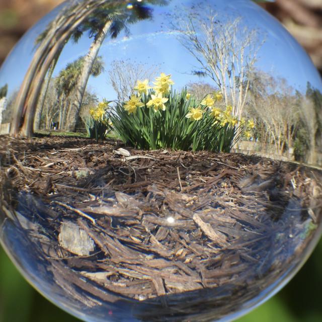 """Crystal Ball with Daffodils"" stock image"
