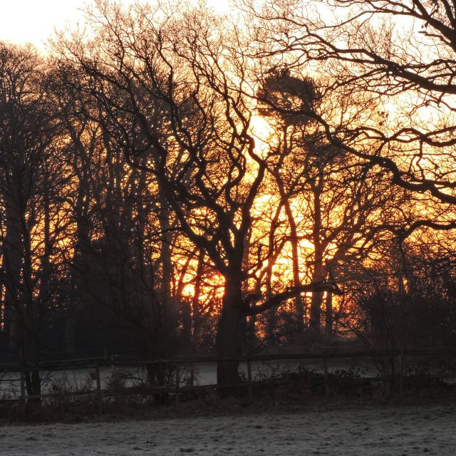 """""""Frosty Morning Sunrise, Middleton, Staffordshire, February 2021"""" stock image"""