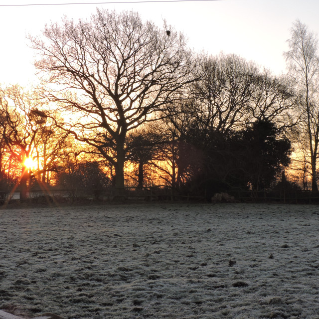 """Frosty Morning Sunrise beaming through the trees, Middleton, Staffordshire, February 2021"" stock image"