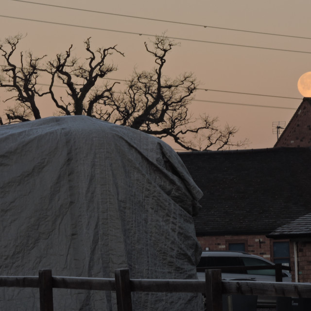 """""""Frosty Morning Moon About To Fall, Middleton, Staffordshire, 2021"""" stock image"""