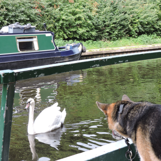 """""""Chloe on a Narrowboat Trip, Staffordshire & Worcestershire Canal, September 2020"""" stock image"""