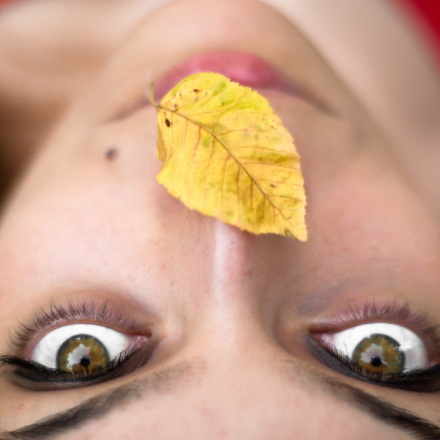 """""""Shea with leaf"""" stock image"""