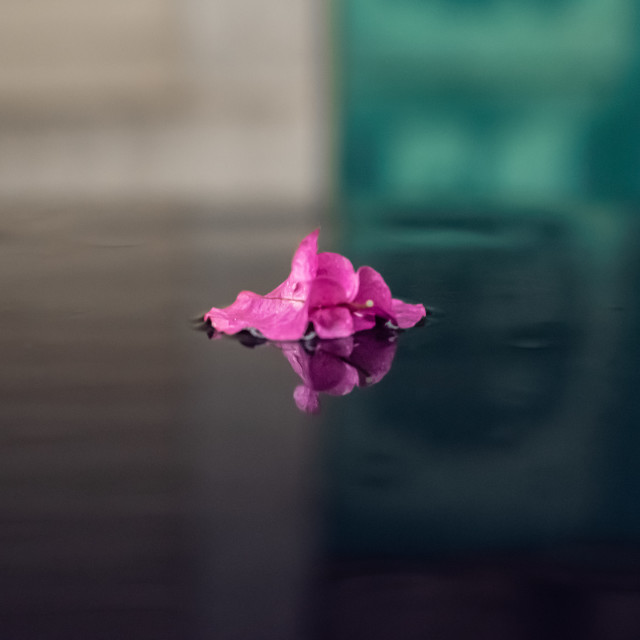 """""""A flower in the midst"""" stock image"""