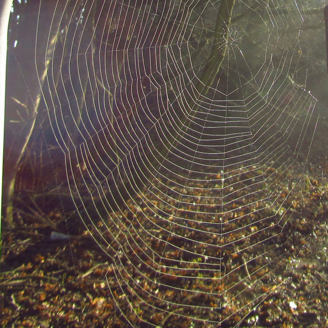 """Suspended cobweb through the mist"" stock image"