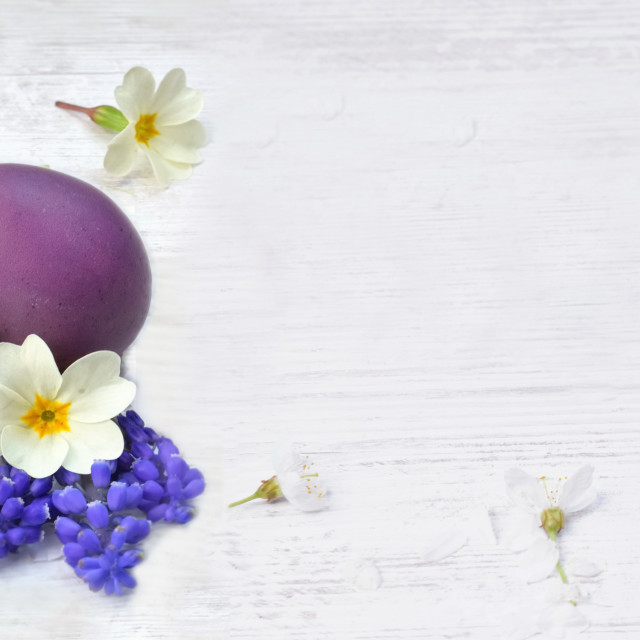 """""""easter eggs painted in pink and purple on a table among spring flowers and petals"""" stock image"""