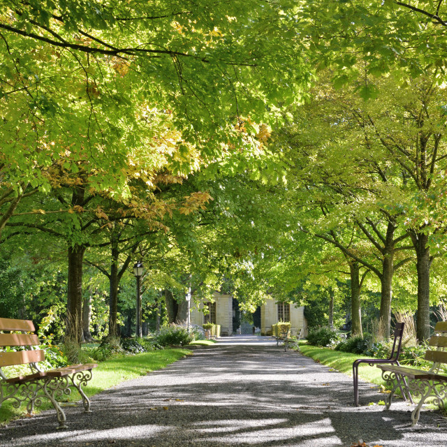 """""""beautiful green foliage of trees borded an alley in a public park with two empty benche"""" stock image"""