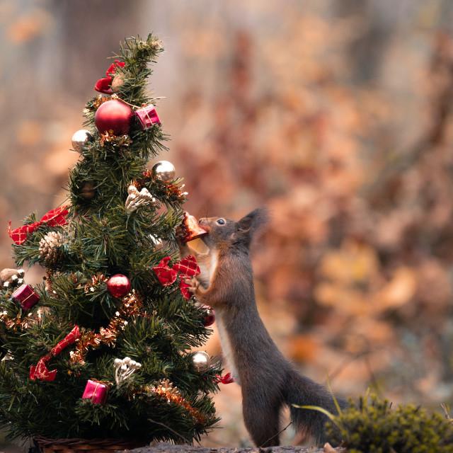 """Christmas Decoration"" stock image"