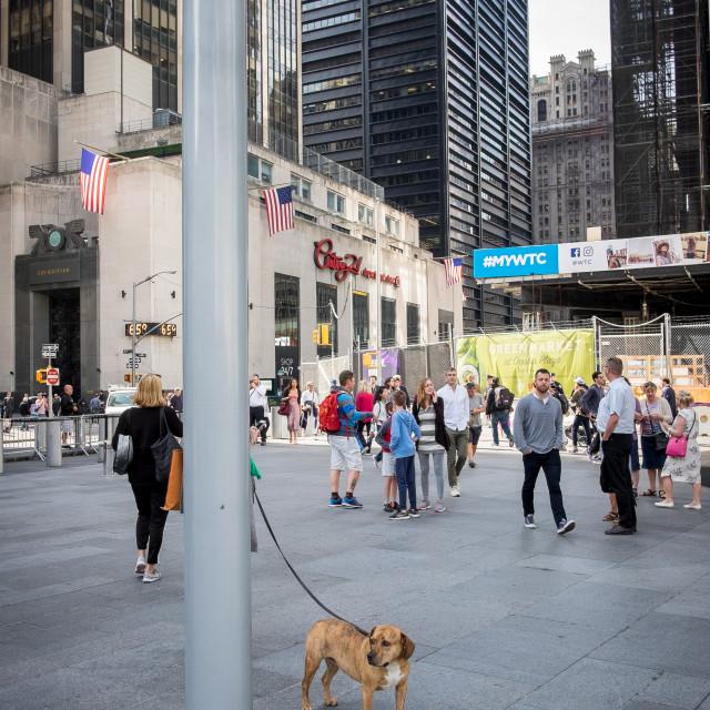 """Dog, World Trade Centre, New York."" stock image"