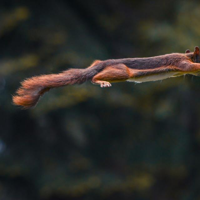 """Squirrel Hero 2"" stock image"