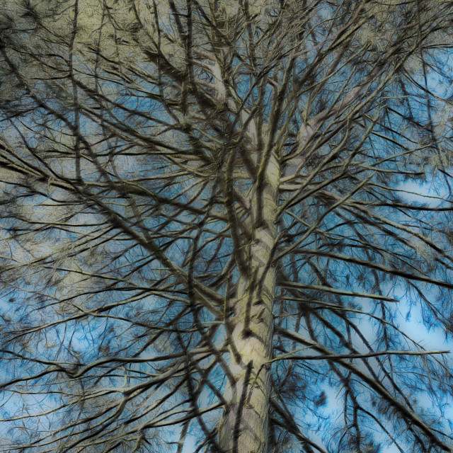 """""""Abstract Pine Tree"""" stock image"""
