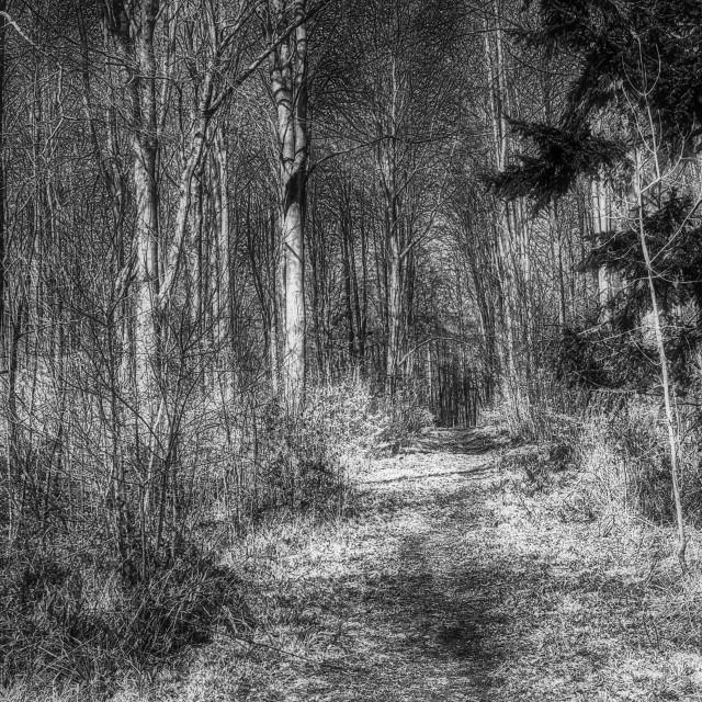 """""""Woodland Walk - Black & White"""" stock image"""