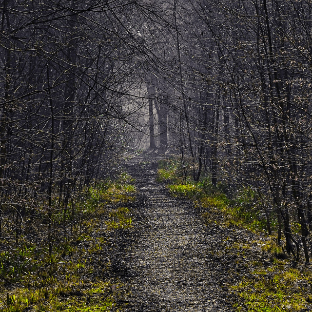 """""""Magical Misty Path"""" stock image"""