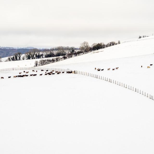 """Winter."" stock image"