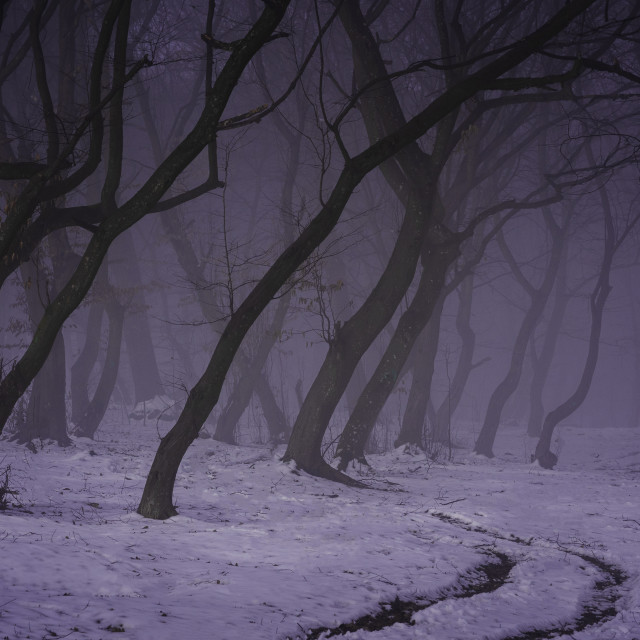 """""""Mist(ery) in haunted Hoia forest"""" stock image"""
