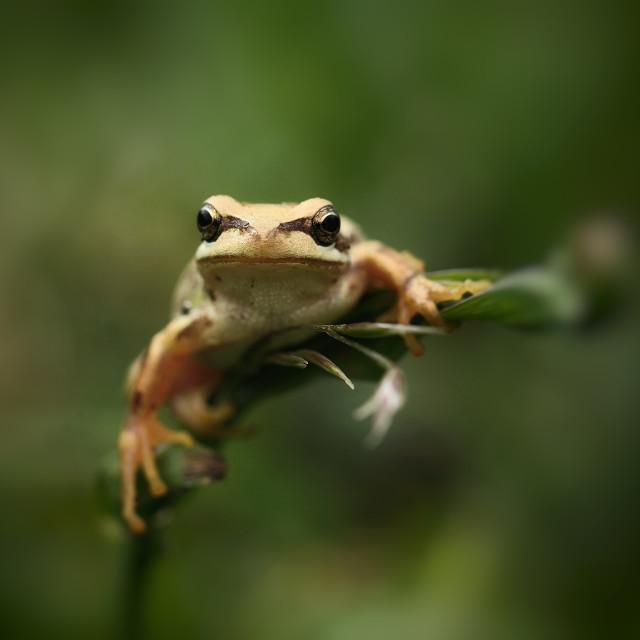 """""""Perfectly Balanced Frog"""" stock image"""