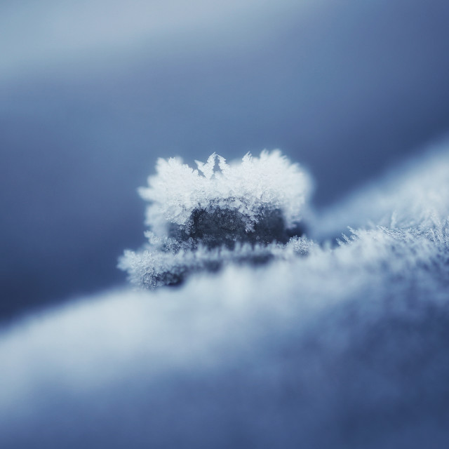 """Jack Frost"" stock image"