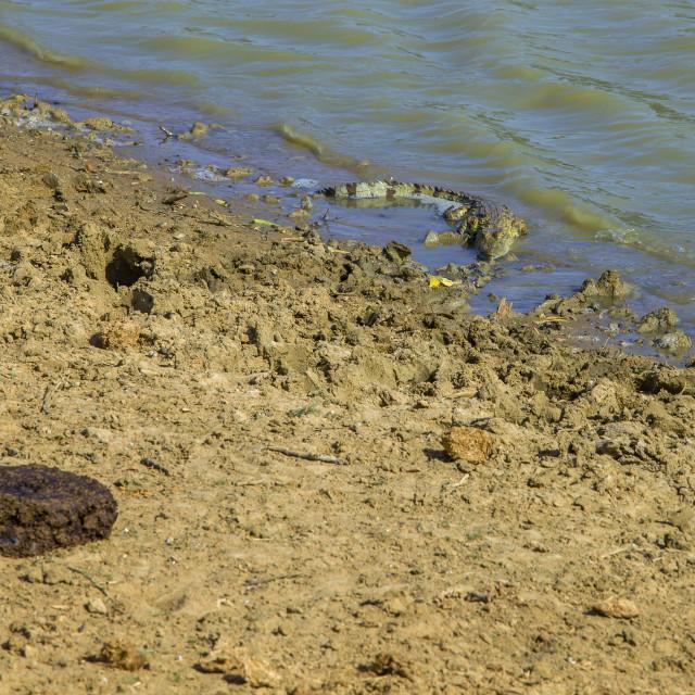 """Crocodile in river"" stock image"