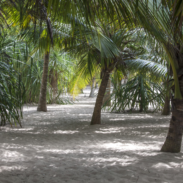 """""""Palm trees giving shade on the beach"""" stock image"""