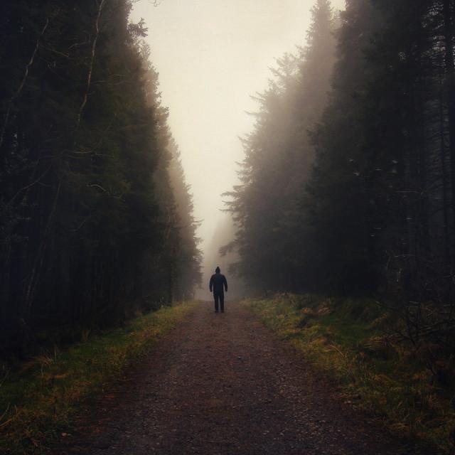 """Walk into the mist"" stock image"