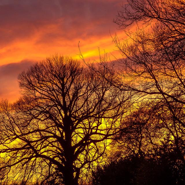 """Winter Sunset Dunnottar Woods"" stock image"
