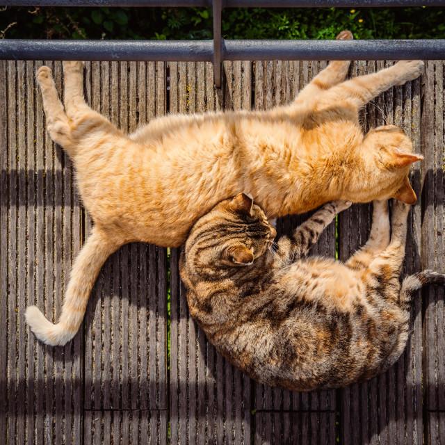"""Cats sleeping on a wooden walkway"" stock image"