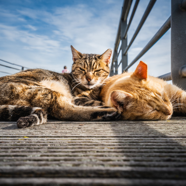 """""""Cats living on the street"""" stock image"""