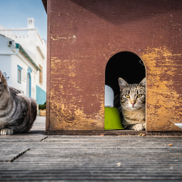"""""""Cats living at home"""" stock image"""