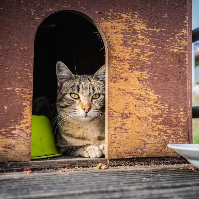 """""""Cat living at home"""" stock image"""