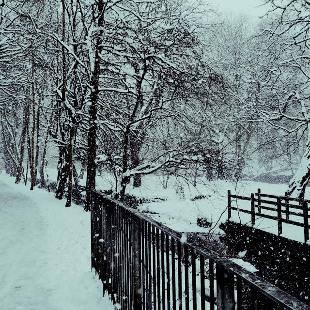 """Snow Fall in Botanic Gardens"" stock image"