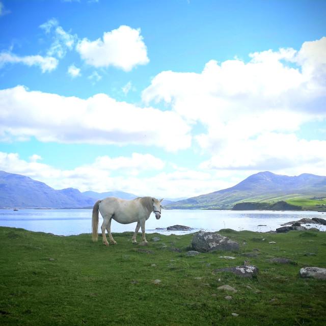 """Connemara beauty"" stock image"