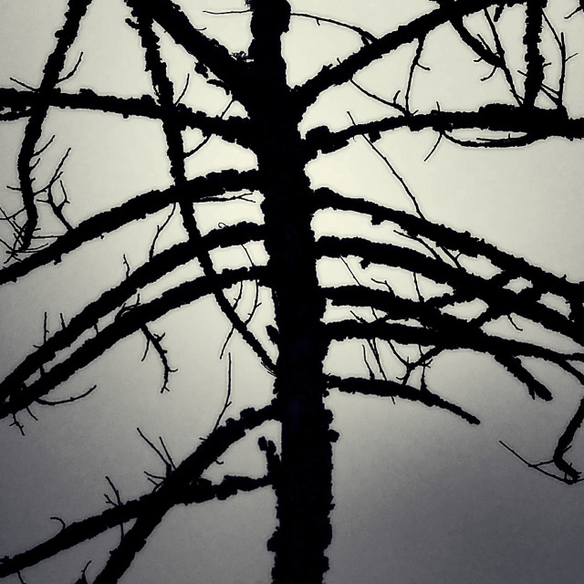 """Bush Branches Silhouette"" stock image"