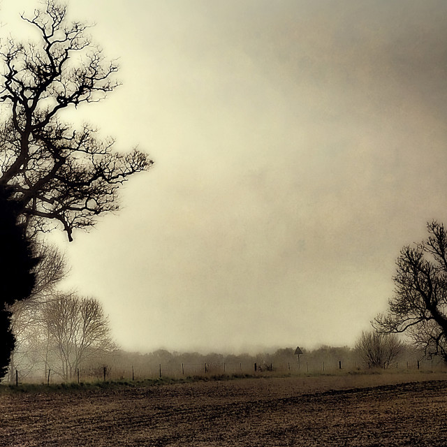 """""""Tree Silhouettes On A Misty Morning"""" stock image"""