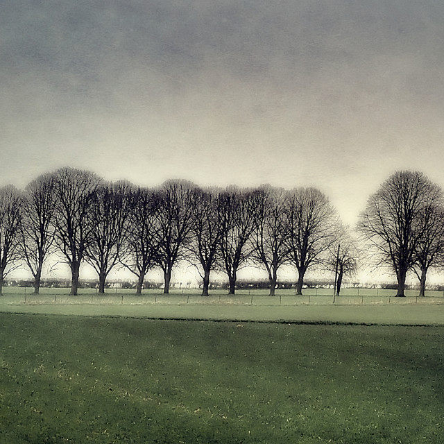"""""""Tree Line Silhouette"""" stock image"""