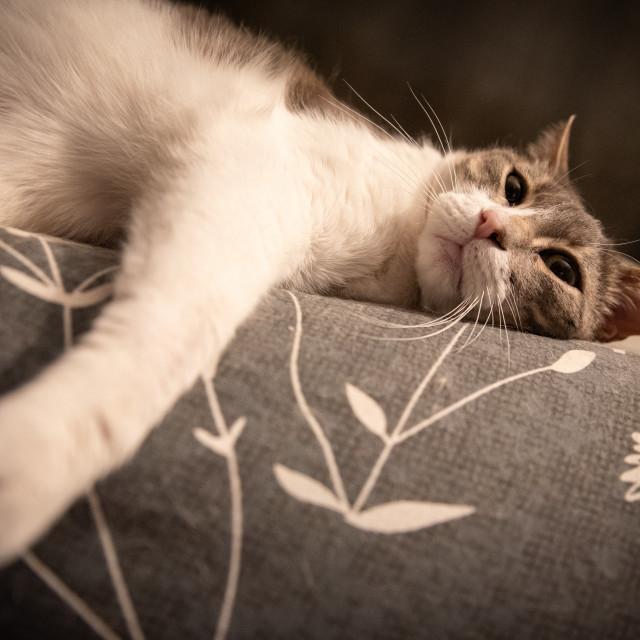 """Cat on sofa"" stock image"