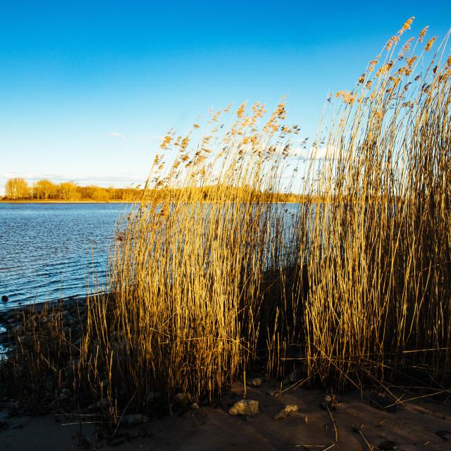 """""""Uferlandschaft mit Weiden an der Elbe"""" stock image"""