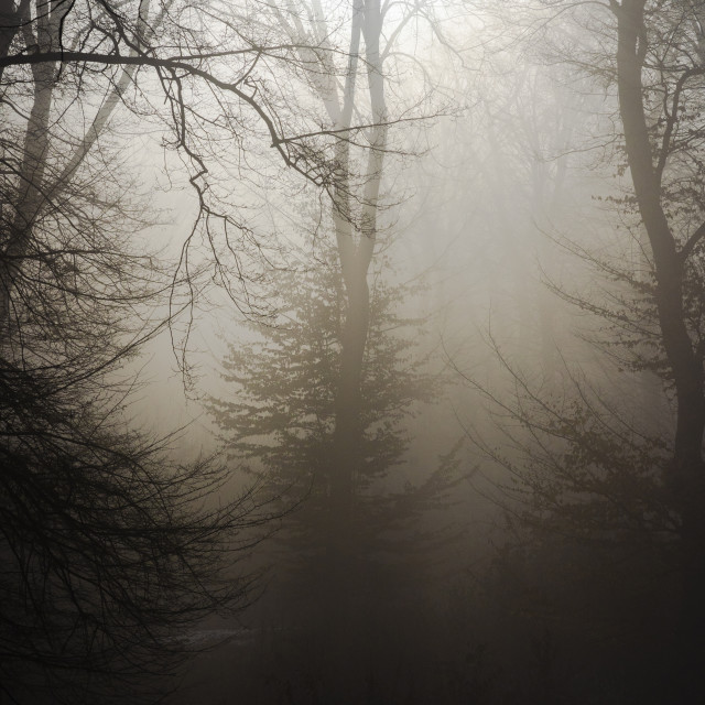 """""""Forest in mystery"""" stock image"""
